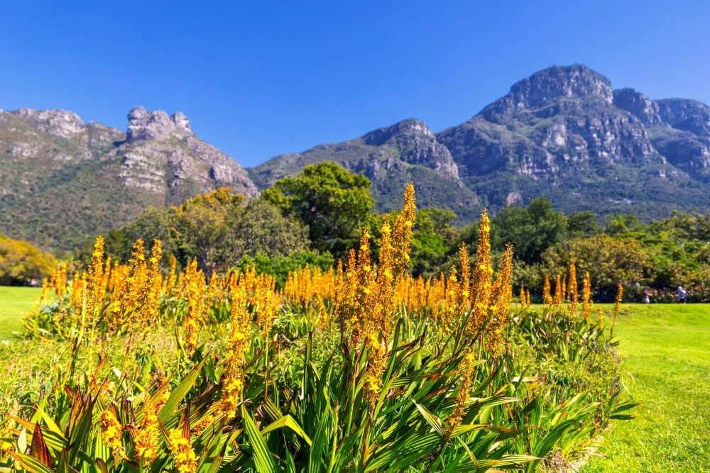 Kirstenbosch, l'un des plus beaux jardins botaniques