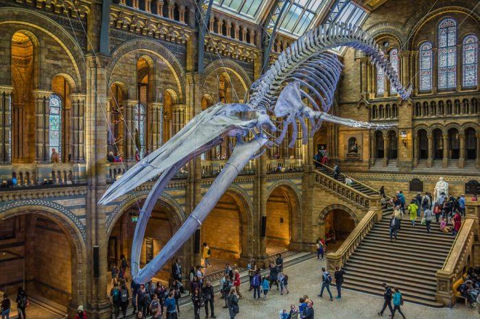 Une visite du Musée d'Histoire Naturelle de Londres