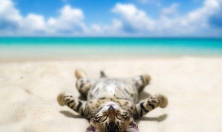 chat vacance