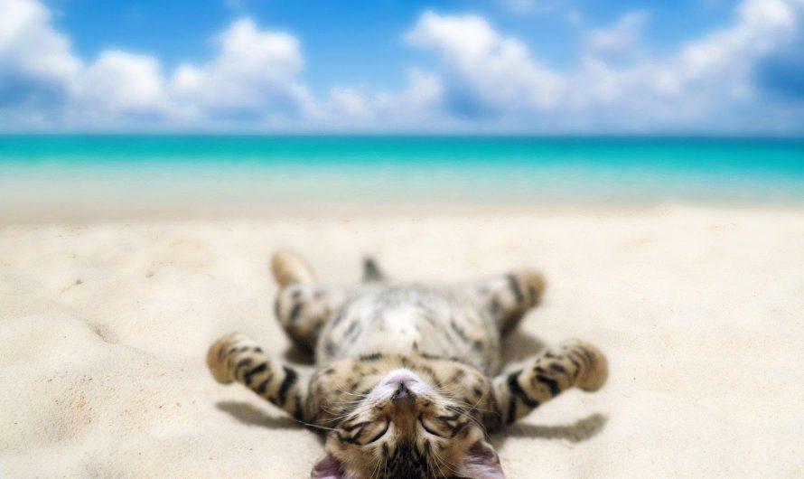 Nos conseils pour partir en vacances avec votre chat